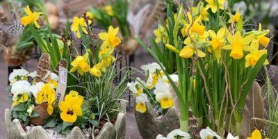 Lidens blommor & trädgård